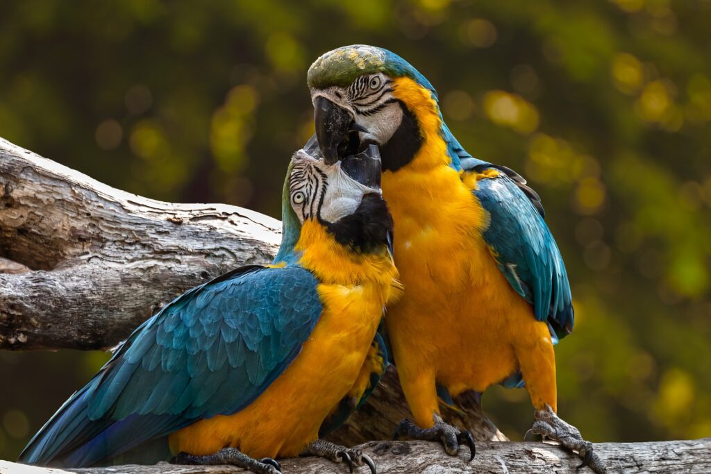 parrots bird supplies at allpetsco