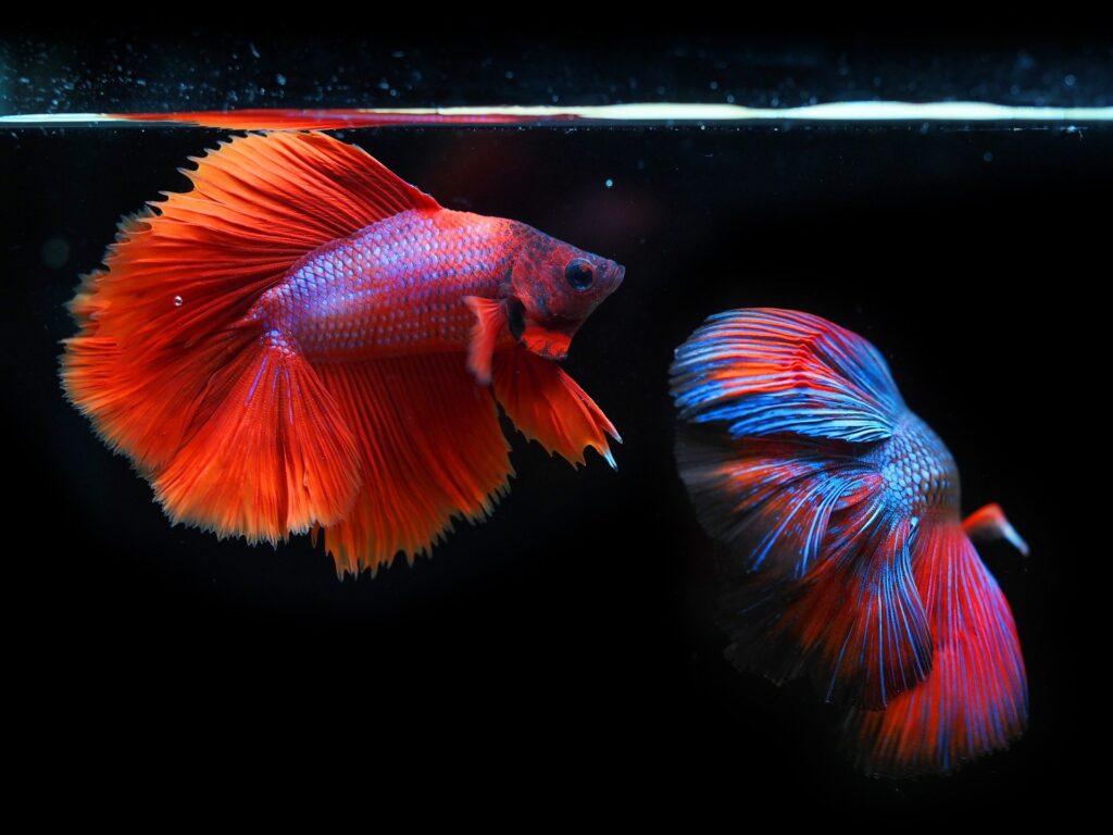 fish and aquarium supplies at allpetsco